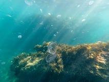 水下的水母水下的海阳光蓝色和珊瑚 库存图片