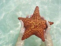 水下的海星 库存图片