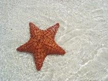 水下的海星 免版税图库摄影