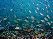 水下的海景 免版税图库摄影