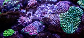 水下的珊瑚礁风景背景 免版税库存照片