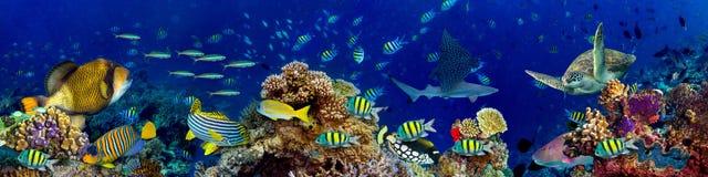 水下的珊瑚礁风景 免版税库存图片