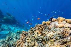水下的珊瑚礁 库存照片