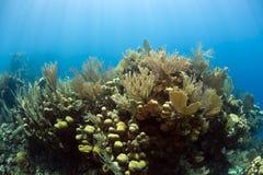 水下的珊瑚礁 免版税库存照片