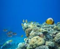 水下的生活 免版税库存图片