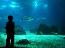 水下的生活 库存图片
