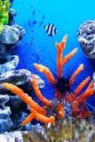 水下的生活 图库摄影