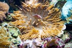 水下的生活 免版税库存照片