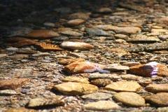 水下的石头 库存图片