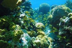水下的礁石 库存照片