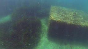 水下的立方体礁石 影视素材