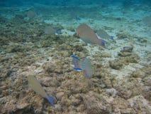 水下的红海 免版税库存图片