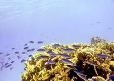 水下的红海 免版税图库摄影