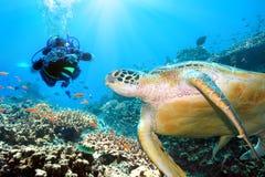 水下的绿海龟 免版税库存照片