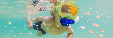 水下的自然课,潜航在清楚的蓝色海横幅,长的格式的男孩 免版税库存图片