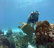 水下的观光者 免版税库存照片