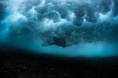 水下的观点的冲浪者 库存照片