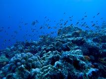 水下的视图 免版税库存照片