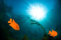 水下的阳光 免版税图库摄影