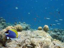 水下的马尔代夫 免版税库存照片