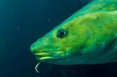 水下的鱼 免版税库存照片