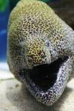 水下的鳗鱼 免版税库存照片