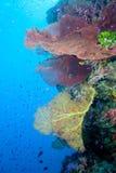水下的reefscape 库存照片