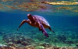 水下绿浪的乌龟 免版税库存照片
