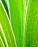 水下落宏指令在绿色叶子的 库存图片