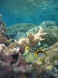 水下障碍巨大礁石的场面 库存图片