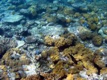 水下障碍极大的礁石 库存照片