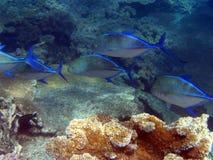 水下障碍极大的礁石 库存图片