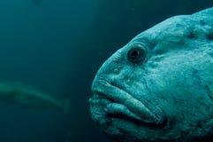 水下鱼的妖怪 免版税库存照片