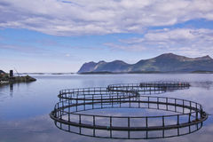 水产养殖在挪威 免版税库存图片