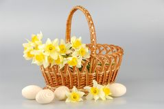 水仙篮子、复活节彩蛋在篮子,春天黄色水仙花妇女的或者母亲节 图库摄影