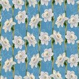 水仙花卉无缝的背景 免版税库存图片