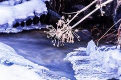 水冻冰块石头纹理  库存照片