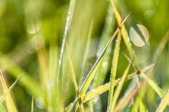 水发光的滴在草的 免版税库存照片