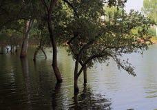 水和树可怕场面在森林里 库存照片