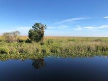 水和树在沼泽地停放 库存照片