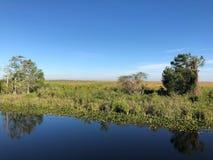 水和树在沼泽地停放 免版税图库摄影