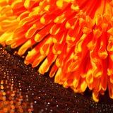 水和橙色花美好的下落  免版税库存照片