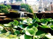水和池塘 免版税库存照片