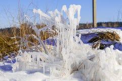 水和灌木冻结的下落在草的与明亮的冬天太阳的 免版税库存图片