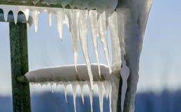 水和灌木冻结的下落在草的与明亮的冬天太阳的 库存照片