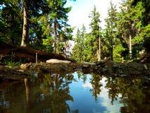 水在森林里 免版税库存照片