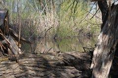 水在比弗河 免版税库存图片