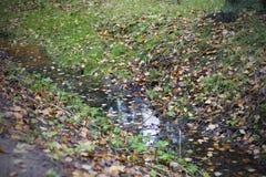 水坑在森林里 免版税图库摄影