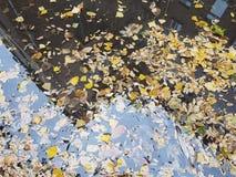 水坑漂浮在树水黄色叶子的和一个高多层的房子的反射,秋天在城市 库存照片