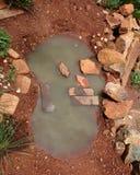 水坑的特写镜头 库存图片